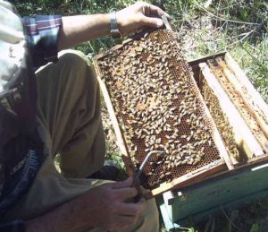 خواص عسل طبیعی (ویدیو)