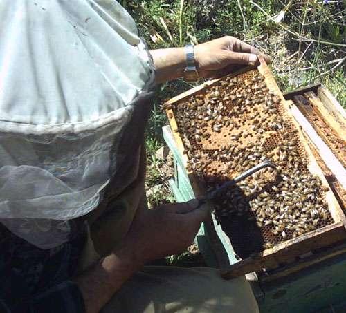 کندو زنبور عسل شان