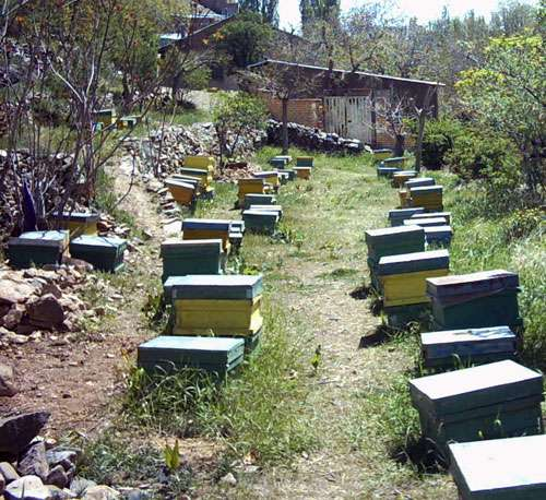 عسل طبیعی هزارگیاه ۳کیلویی۹۷