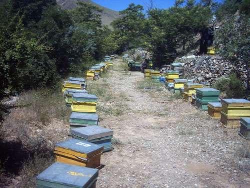 نمایی از کندوهای زنبورستان برادران حاتمی در روستای کاسوا