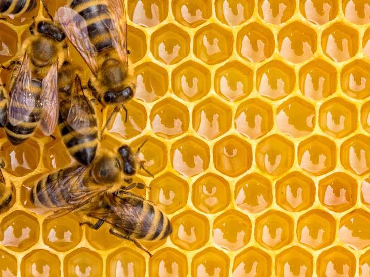مراحل ساخت عسل توسط زنبور عسل