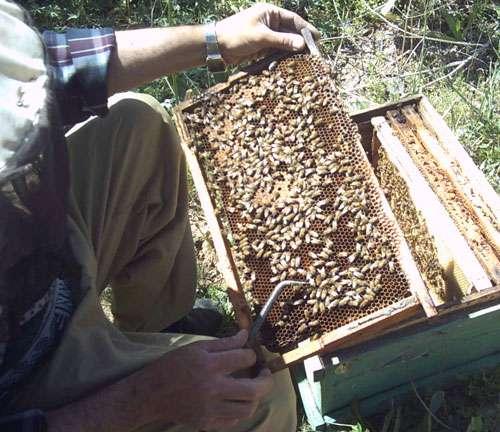 از کجا بفهمیم عسل طبیعی است