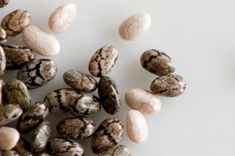 دانه چیا چیست