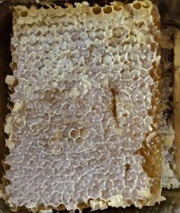 عسل موم دار نخرید