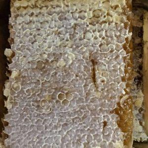 عسل سبلان با موم ۱ کیلویی