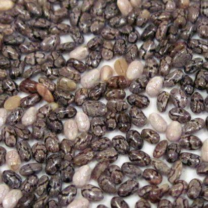 سوالات متداول درباره دانه چیا