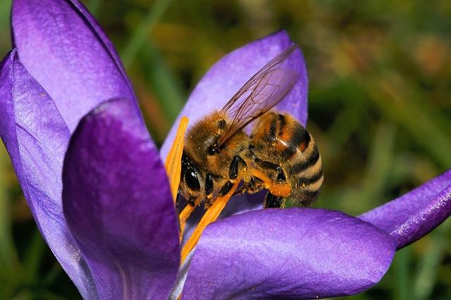عسل چهل گیاه
