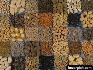 طبع خوراکی ها بذرها